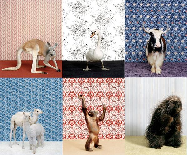 animalwp.jpg