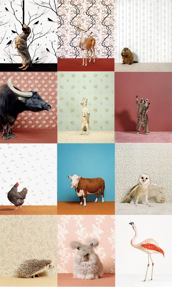 animalwp1.jpg