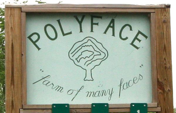 polyface1.jpg