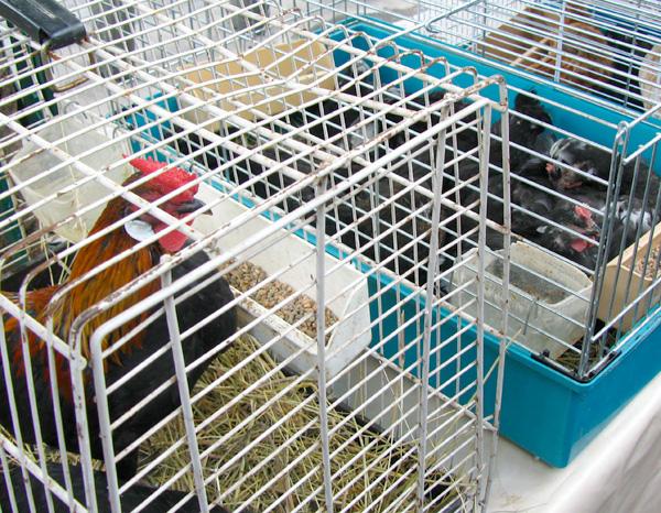 critters12.jpg