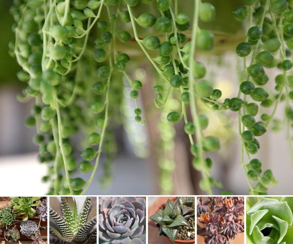 plant0.jpg