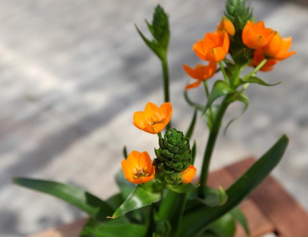 plant27.jpg