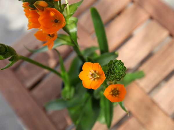 plant28a.jpg