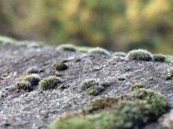 moss6.jpg