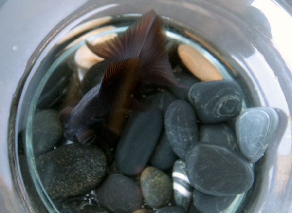 goldfish4.jpg