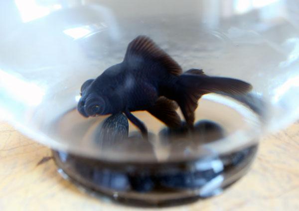 goldfish6.jpg