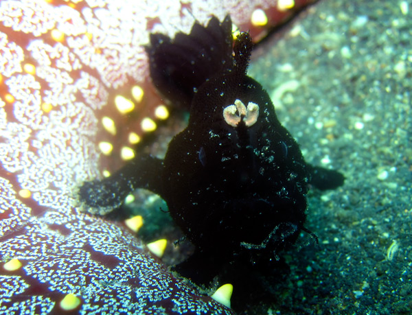 frogfish4.jpg