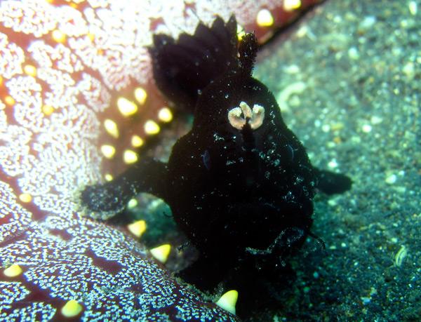 frogfish4.jpg