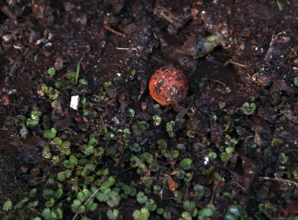 seedbomb4.jpg