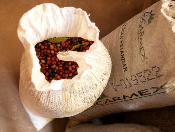 coffeebean4.jpg