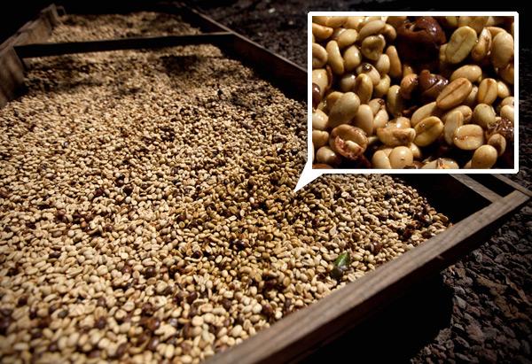 coffeebean5.jpg