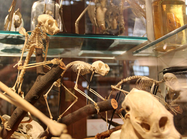 primateskeletons.jpg