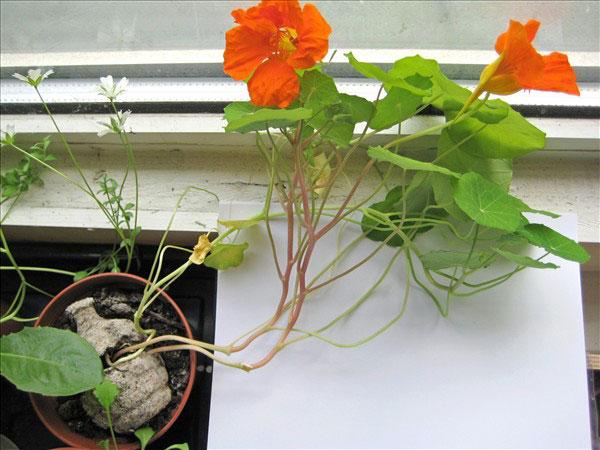 seedbomgrowingwithflowers.jpg