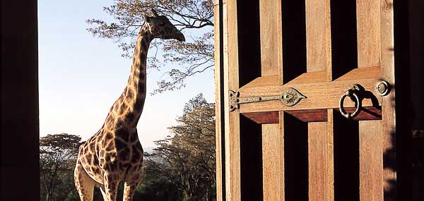 giraffe-manor-surrounding2.jpg