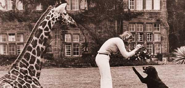 giraffearchive1.jpg
