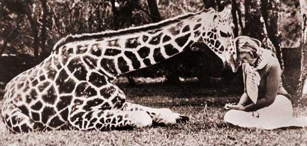 giraffearchive2.jpg