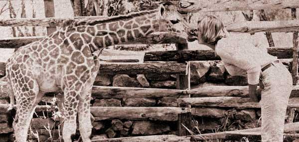 giraffearchive3.jpg