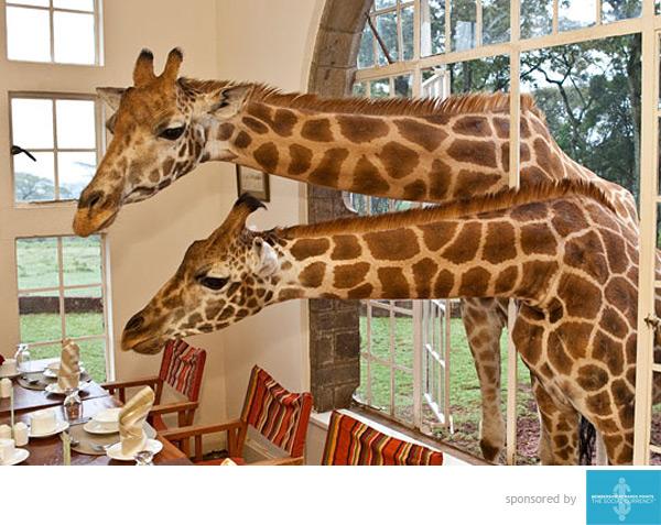 giraffemain.jpg