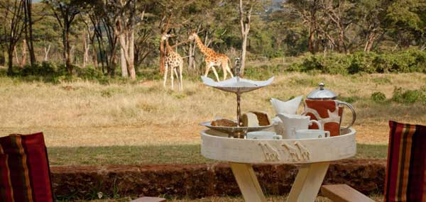 giraffemanorhightea.jpg