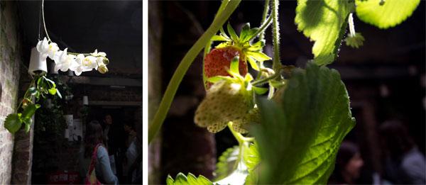 orchidstrawberryskyplanter.jpg