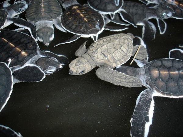 turtles3.jpg