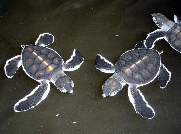 turtles5.jpg