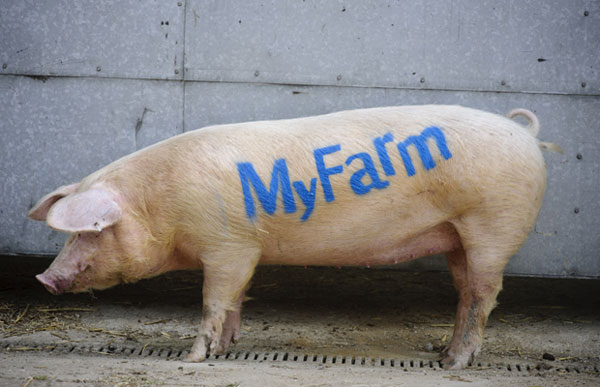 myfarmpig.jpg