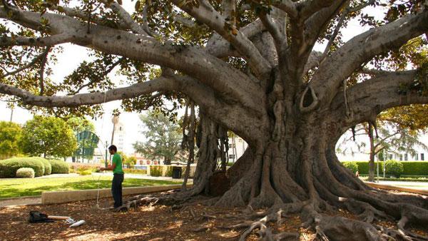 waldmanswingtree.jpg