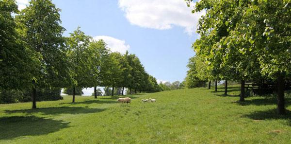 woodlandlambs.jpg
