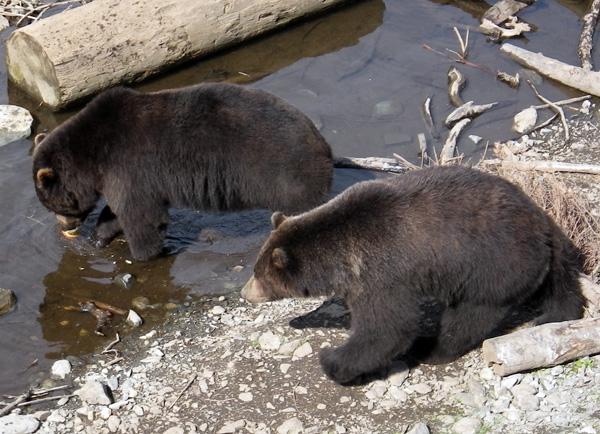 bears0.jpg