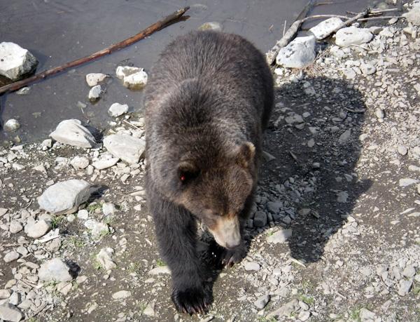 bears4.jpg