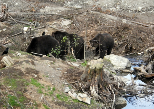 bears6.jpg