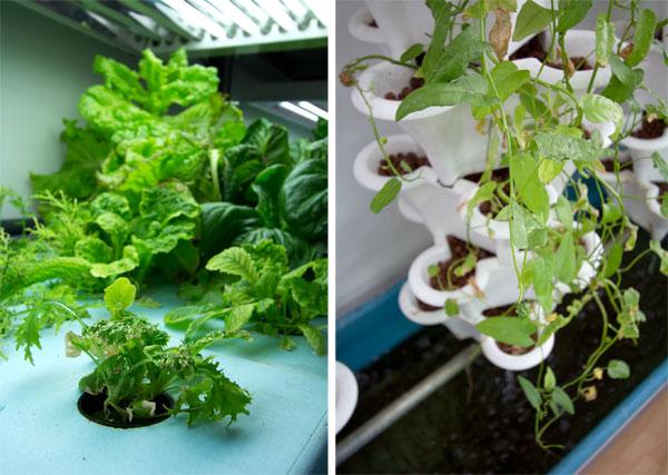 6-farmshopfrontroomplants.jpg
