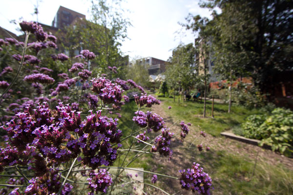 dalstonpurpleflowers.jpg