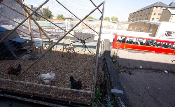 farmshopchickenroof.jpg