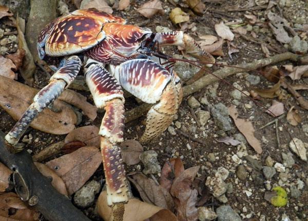 crabs10.jpg