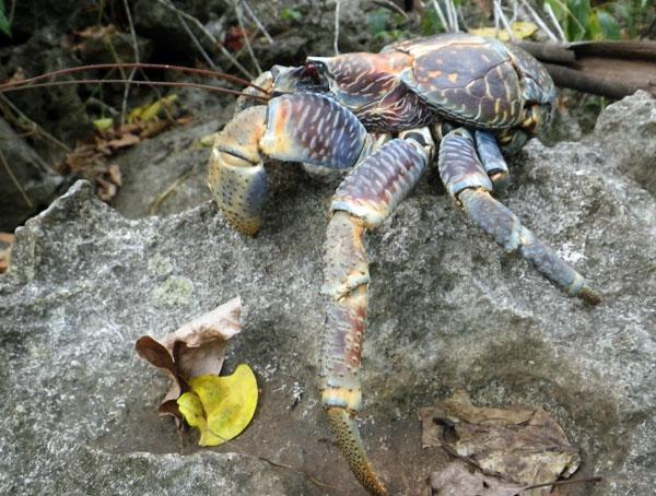 crabs11.jpg