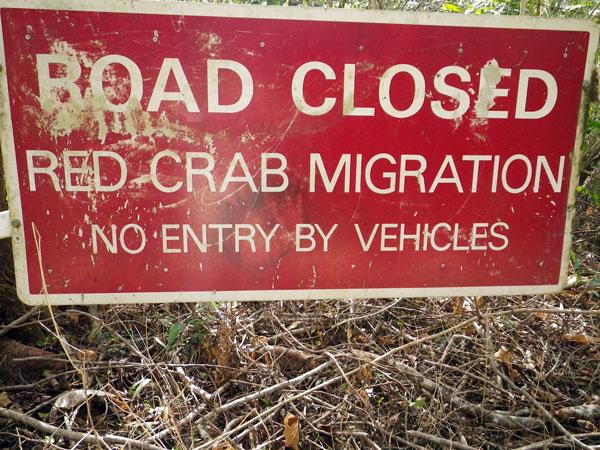 crabs12.jpg