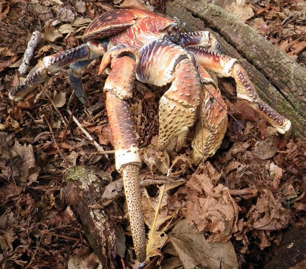 crabs7.jpg