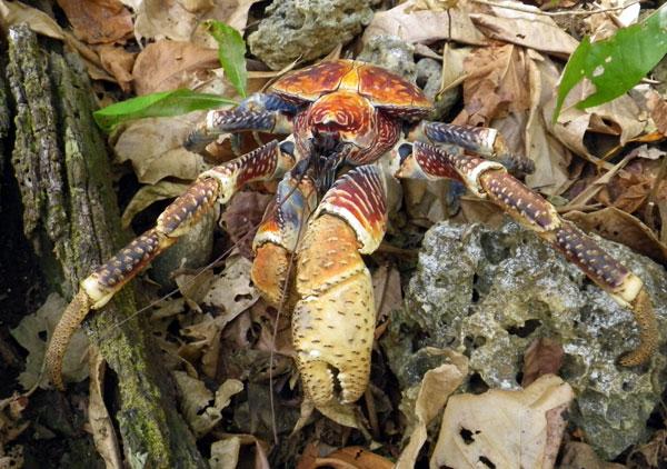 crabs8.jpg