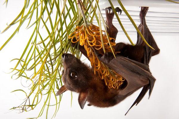 biodiversity10.jpg