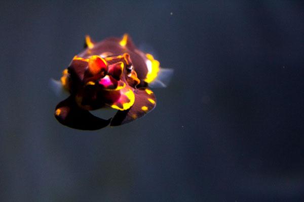 fcuttlefish1.jpg