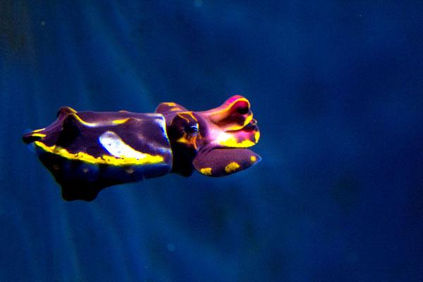 fcuttlefish4.jpg