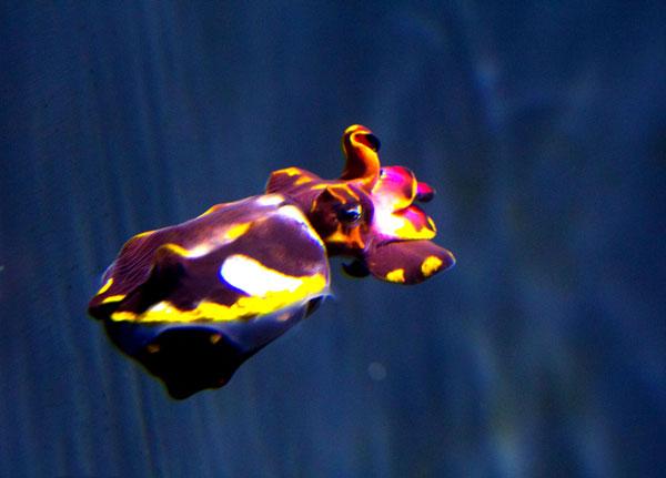 fcuttlefish5.jpg