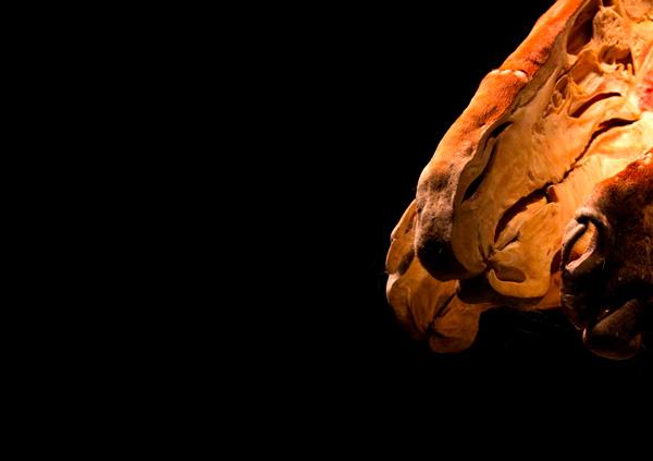 insideout13c.jpg