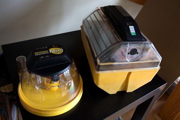 incubation-setup-2435b.jpg