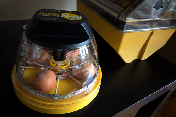 incubation-setup-2437b.jpg