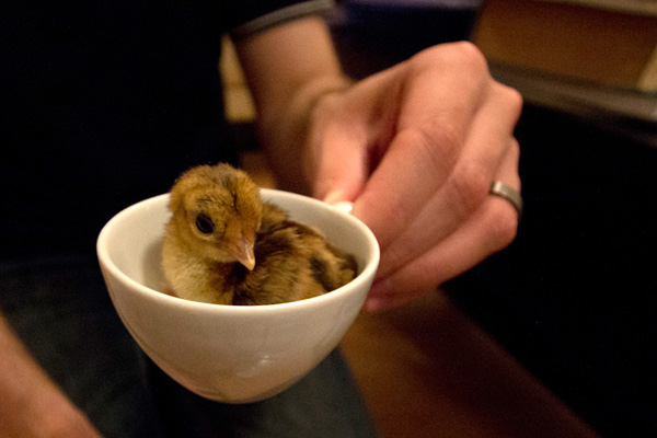 Tiny chicks tubes images 63