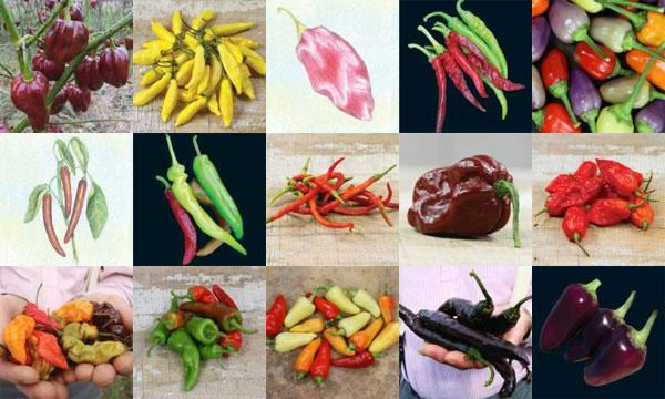 varieties1.jpg