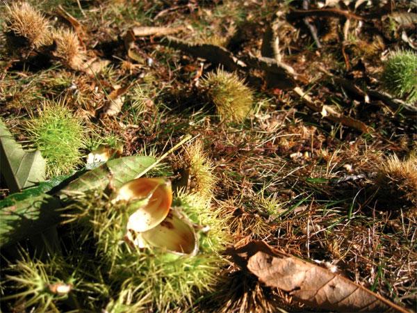 chestnuts-02.jpg